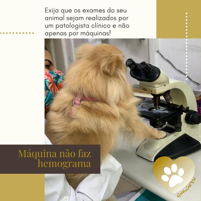Exija um exame de qualidade para o seu Pet! Exija que ele seja realizado por um patologista clínico!