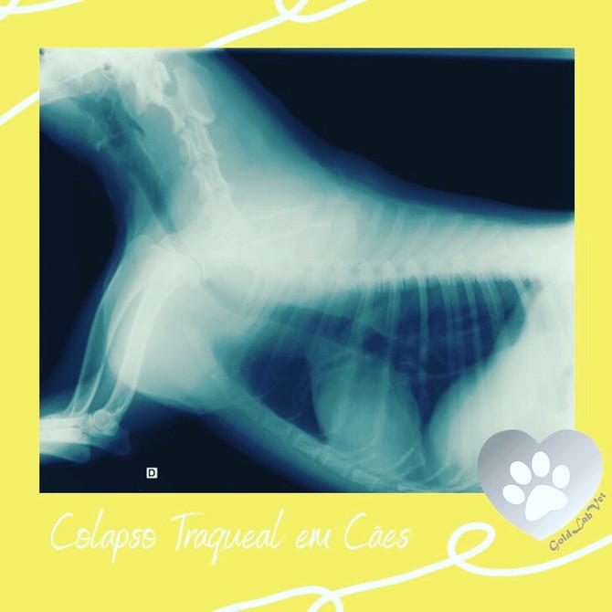 Colapso traqueal em cães