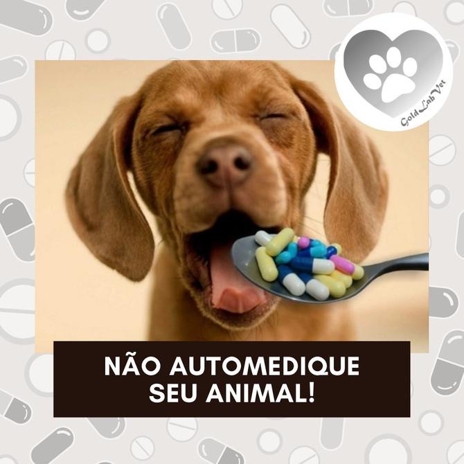 Os riscos da automedicação em Pets!