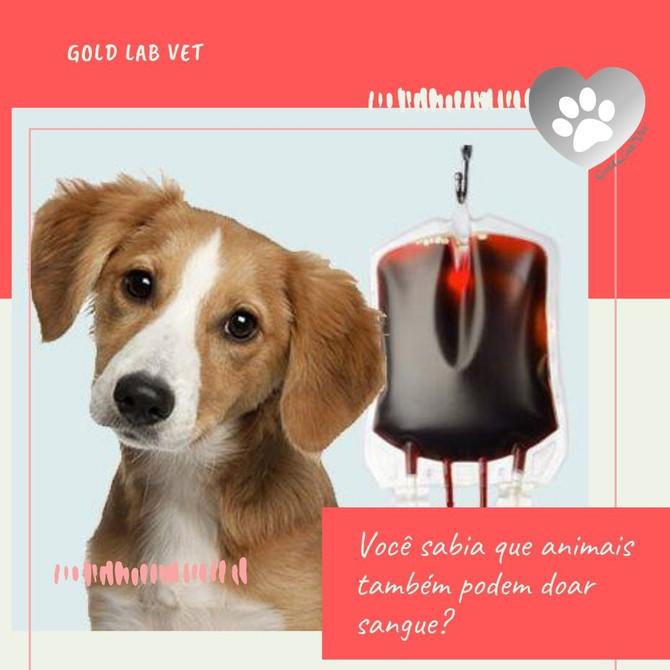 Você sabia que animais também podem doar sangue?