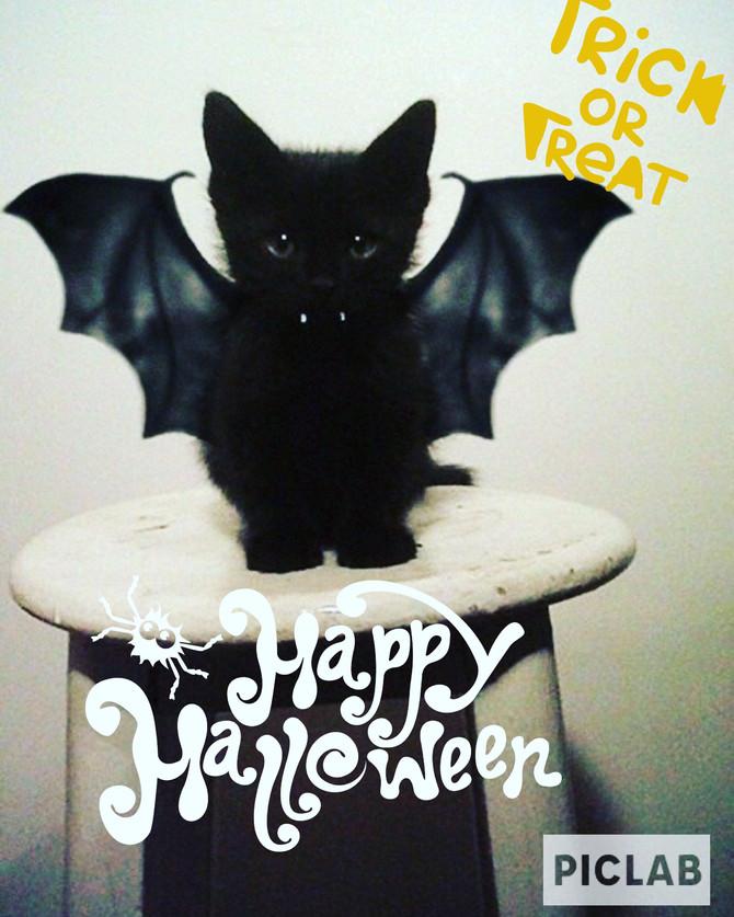 Happy Halloween! 🎃 👻