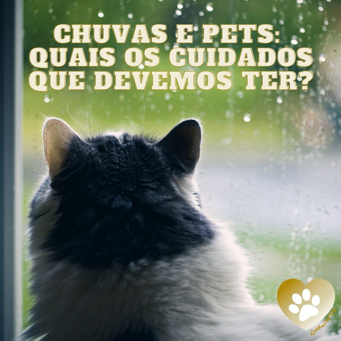 Chuvas e pets: quais os cuidados que devemos ter?