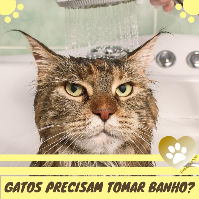 Banho em gatos? Gatos precisam tomar banho?
