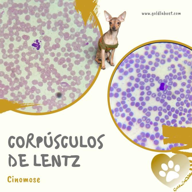 Corpúsculos de Lentz
