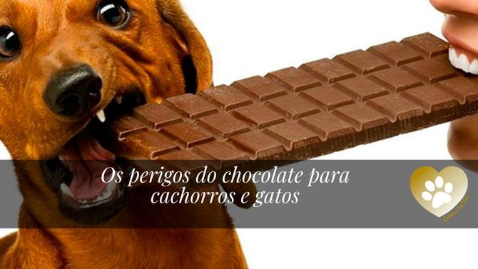Os perigos do chocolate para cães e gatos