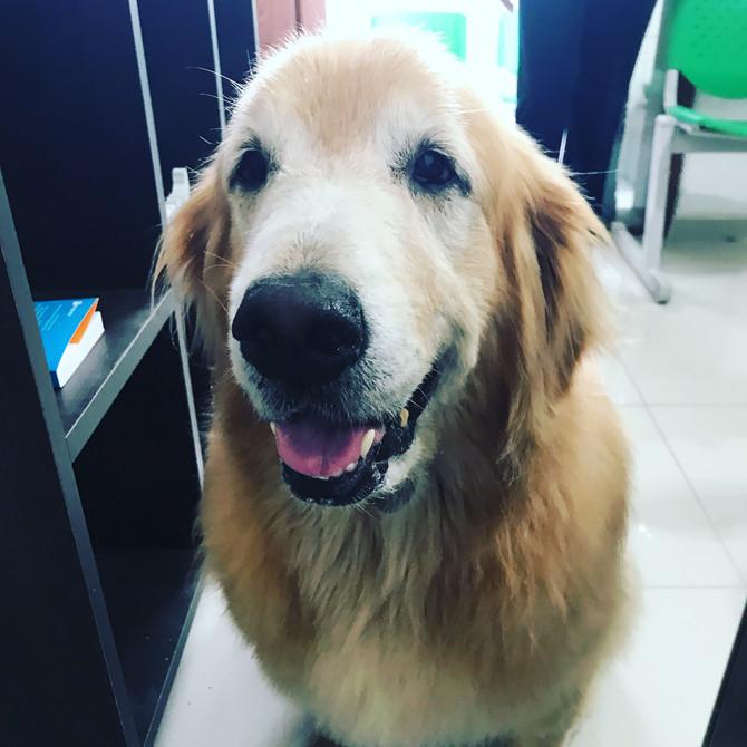 Pensa em uma fofura de cão! Meg...ela senta e da a pata em troca de um biscoito e cafuné! ❤️🐶❤️
