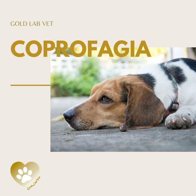 Coprofagia