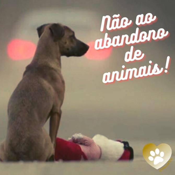 Dezembro verde – Não ao abandono de animais!