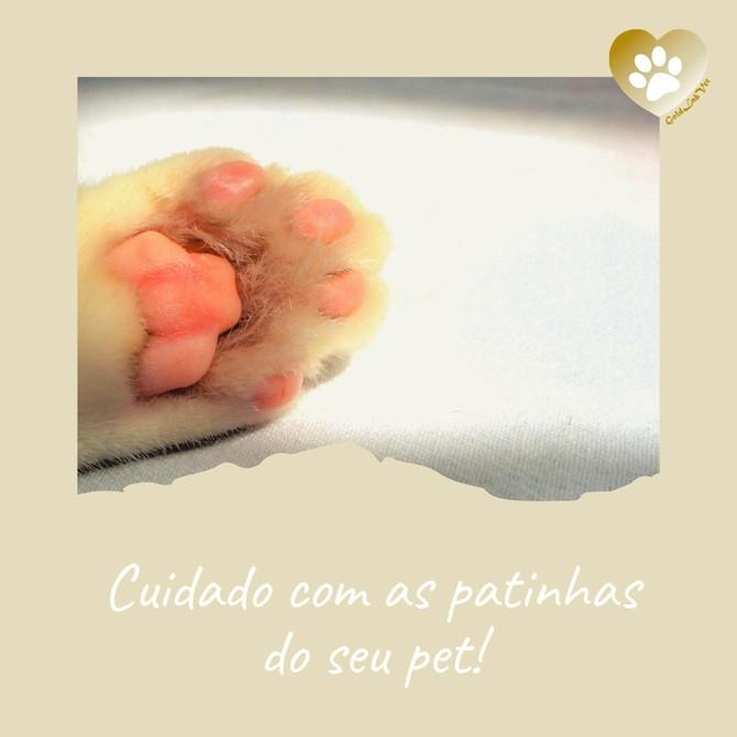 Cuidado com as patinhas do seu pet