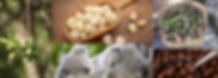 Macadamia slide.jpg