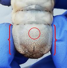 Where to look for spot female mtu larvae