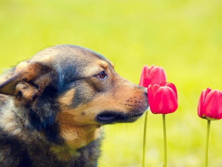 Dogs could save America from pandemic, can identify people with coronavirus