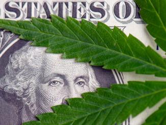 Marijuana Industry Is Being Stolen From Black Community