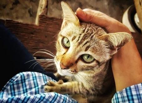 Les chats reconnaissent-ils leur maître ?