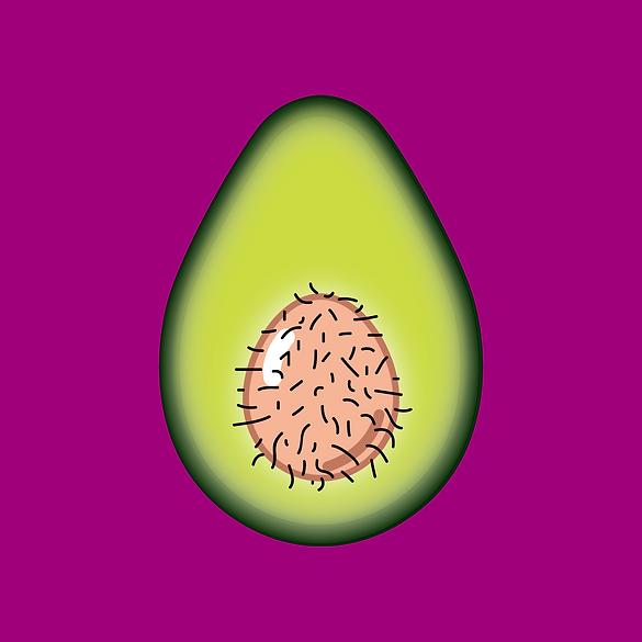 Avocado-07.png