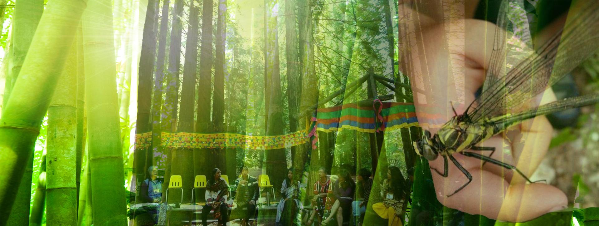 Bamboo Gathering