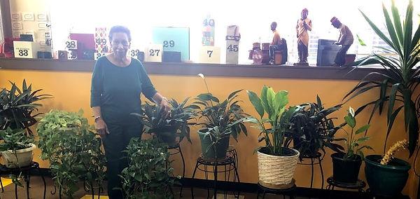 Plant Volunteer -.jpg