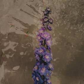 Fleursbleues.jpg