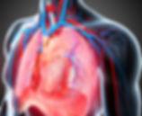 торакальная хирургия в Турции, операции на сердце, операции на лёгкие, операции на пищевод, операции на молочные железы, операции на грудной клетке, плевральная пункция, торакотомия, торакоскопия, медиастиноскопия, торакоцентез, дренирование плевральной полости, операции на грудной стенке