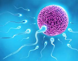 мужское бесплодие,андрология - лечение бесплодия в Турции и за рубежом, ЭКО в Турции, спермограмма, гипоспадия, гипогонадизм, гиперэстрогения, анэякуляция, азооспермия, олигоспермия, некроспермия, тератозооспермия, эндокринопатия, варикоцелэктомия, ЭКО, ZIFT, GIFT