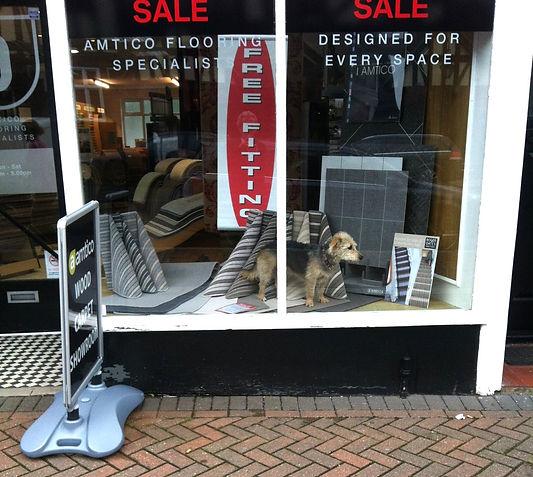 doggie in shop window