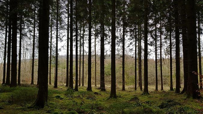 Forest Surveys About Us