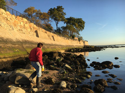 Seawall Consulting