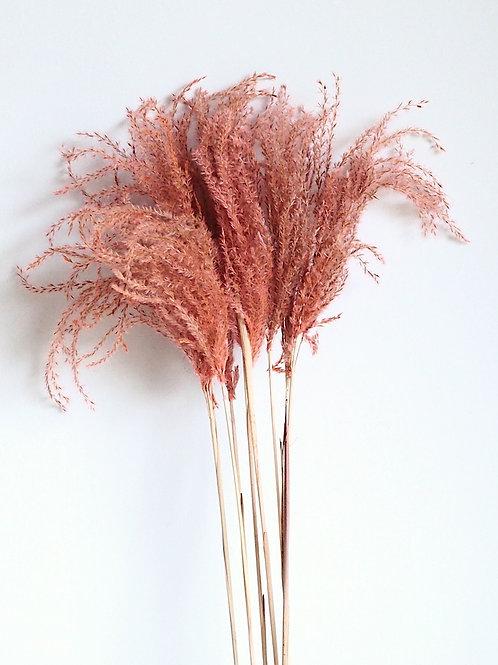 Natuurlijk gedroogde Miscanthus Pluimen Rose Dust (per 4 stelen) 80cm