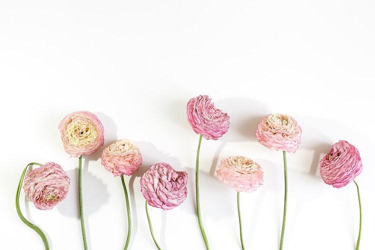 Droogbloemen_BloomsnBlossoms.jpg