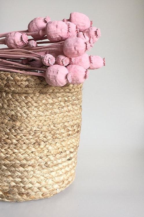 Droogbloemen/gedroogde bloemen Misty Pink Gedroogde Papaver Poppy Seed Head - per 10 stengels