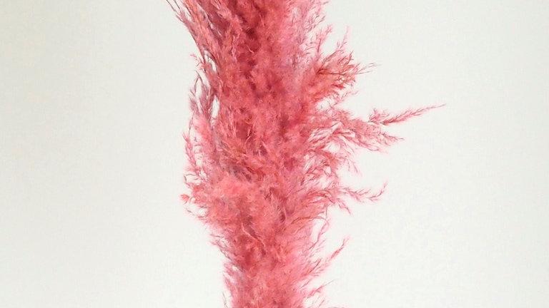 Natuurlijk gedroogd Pampasgras Pluimen Roze (per pluim) 130cm