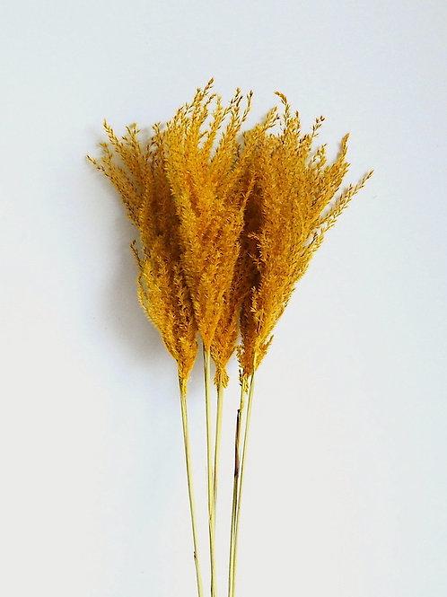 Natuurlijk gedroogde Miscanthus Pluimen Honey Yellow (per 4 stelen) 80cm