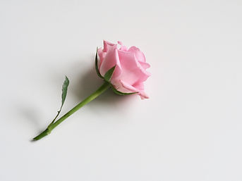 bloom-blooming-blossom-929778.jpg