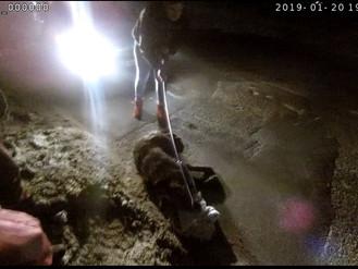Збитого на дорозі пса доправили у ветлікарню
