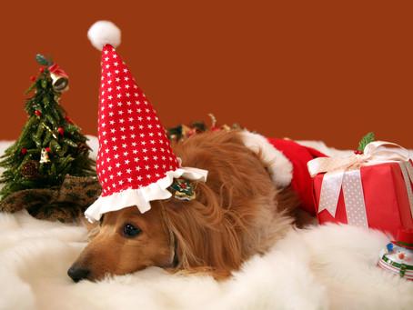 Christmas Newsletter & Office Hours