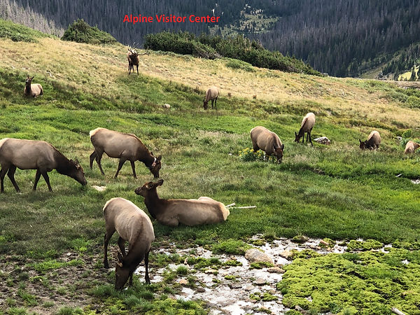 Alpine Visitor Center.jpg
