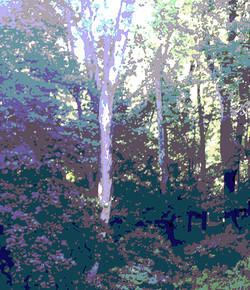 trees-Angies-3-9jul18