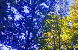trees-Angies-4-10jul18
