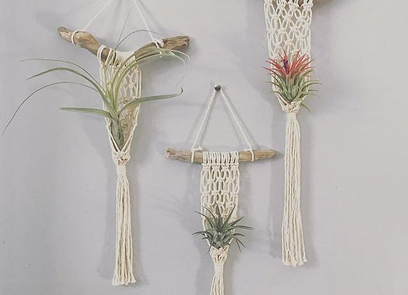 Fisherman's Net Air Plant Hanger
