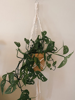 Web Plant Hanger