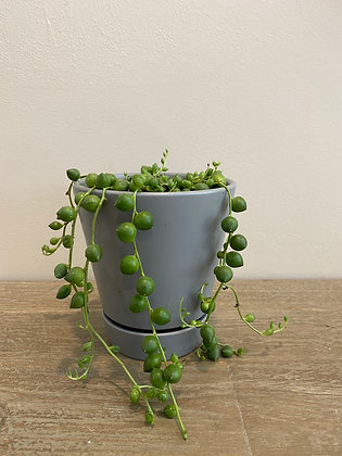String of Pearls - Gray