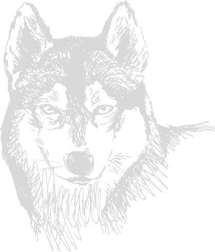 Cão Balto