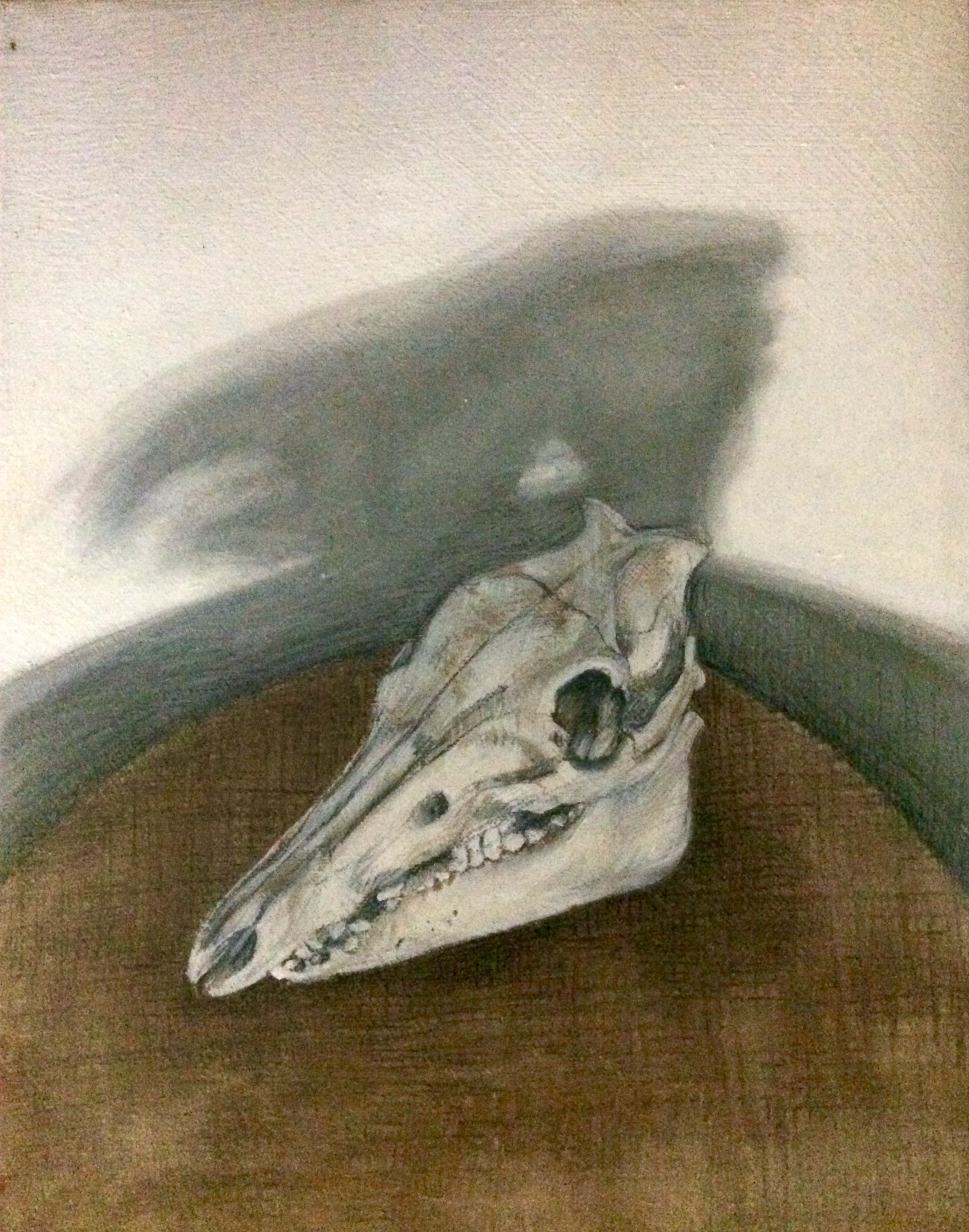 Skull Study