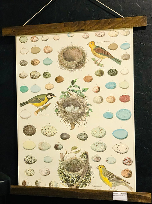 Botanical poster- birds