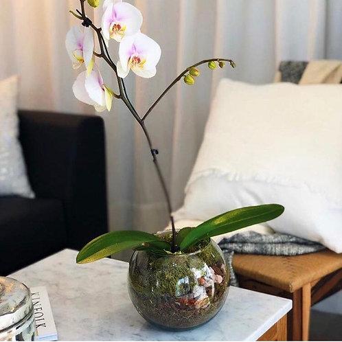 Orquidea en bocha