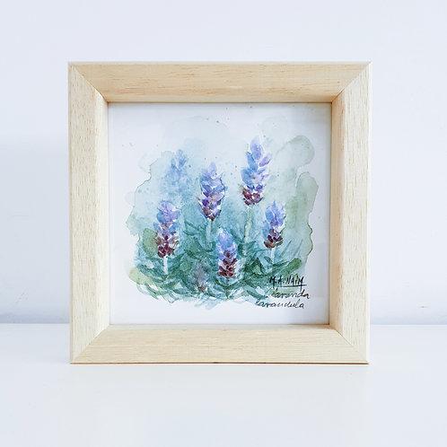 Acuarela Serie Flora de la Patagonia