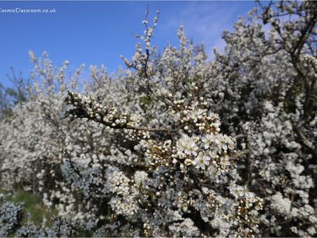Blackthorn brings insightful blessings