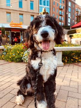 Dog Friendly Piazza