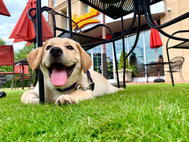 Who doesn't love a dog friendly piazza??