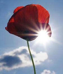 poppy sun.jpg
